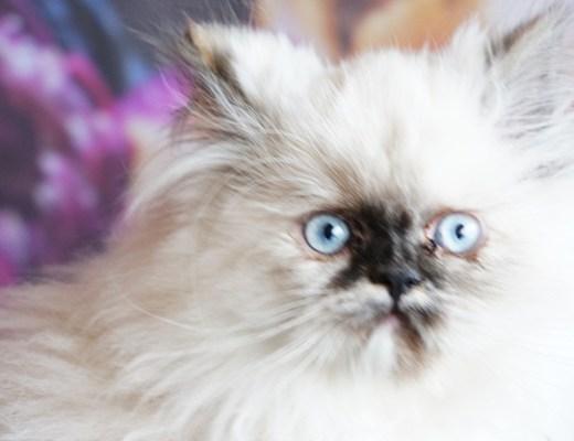 sassy3 - Meet Sassy!