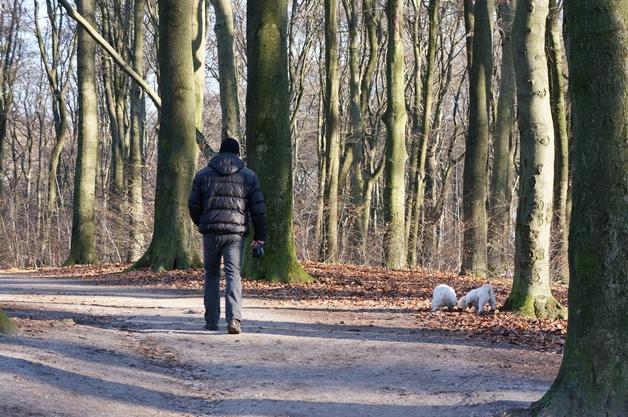 walkinthepark16 - Een winterse wandeling in Park Sonsbeek