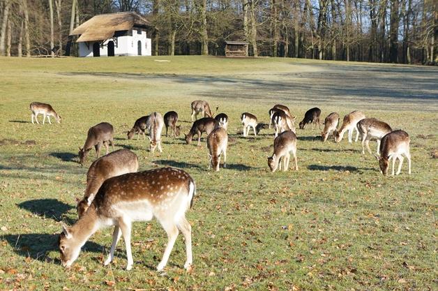 Een winterse wandeling in Park Sonsbeek