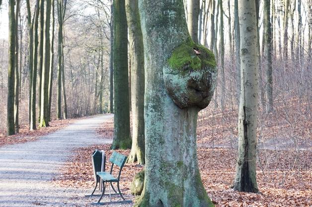 walkinthepark20 - Een winterse wandeling in Park Sonsbeek