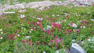 July wildflowers