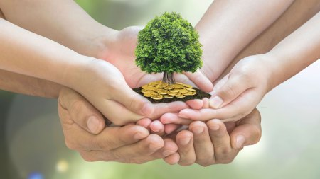 Hands holding a money tree feature image
