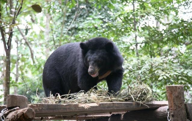Bear Rescue Center in Luang Prabang