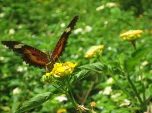Butterfly Garden in Puerto Princesa