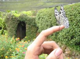 Butterfly Sanctuary in Cebu