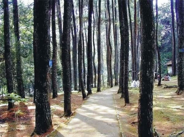 Juanda Forest Park in Bandung