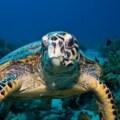 sea turtle in palawan