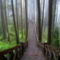 forest park, taiwan, chiayi