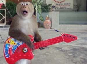 moneky shows, samui, thailand