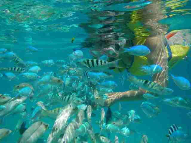 snorkeling, activity, fiji