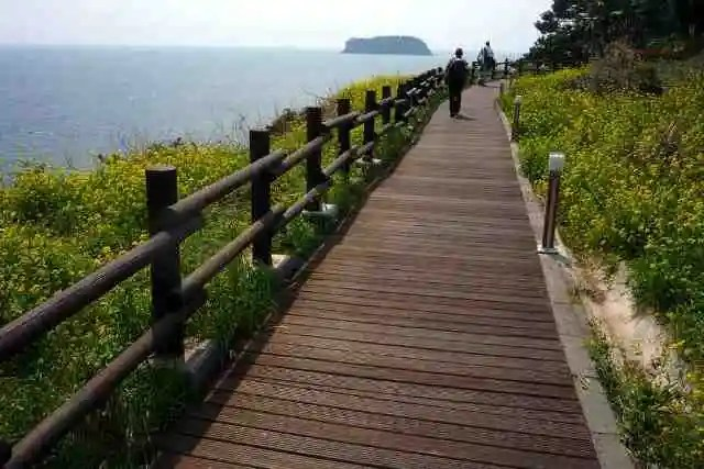 olle trail, jeju-do