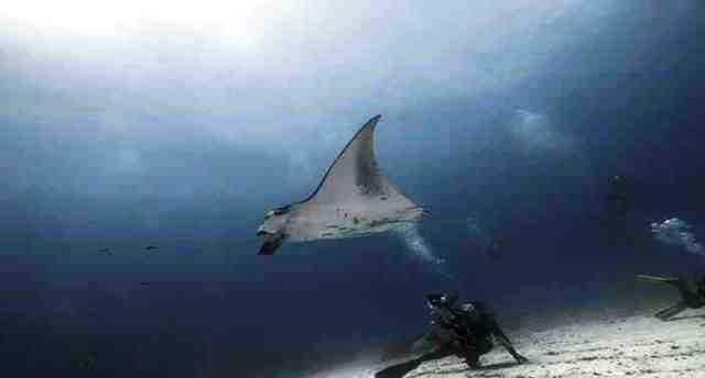 mantra, maldives, diving
