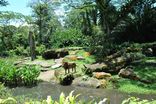 Come visit Singapore Zoo