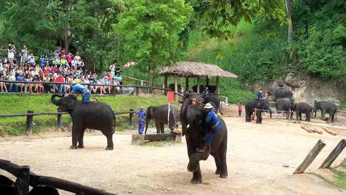 chiang mai, thailand, mae sa elephant training centre
