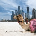 beach, silver sands, dubai