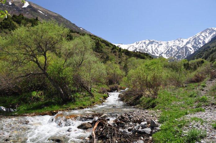 aksu-zhabagly state natural reserve, kazakhstan