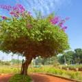 hanging gardens, mumbai, india