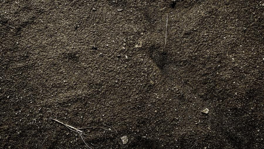 Living Soil Contains Soil Microorganisms