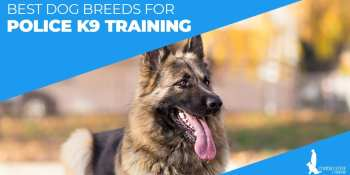 Best Dog Breeds For Police K9 Training