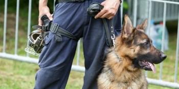 The 3 Factors Behind K9 Drug Dog and Handler Reliability