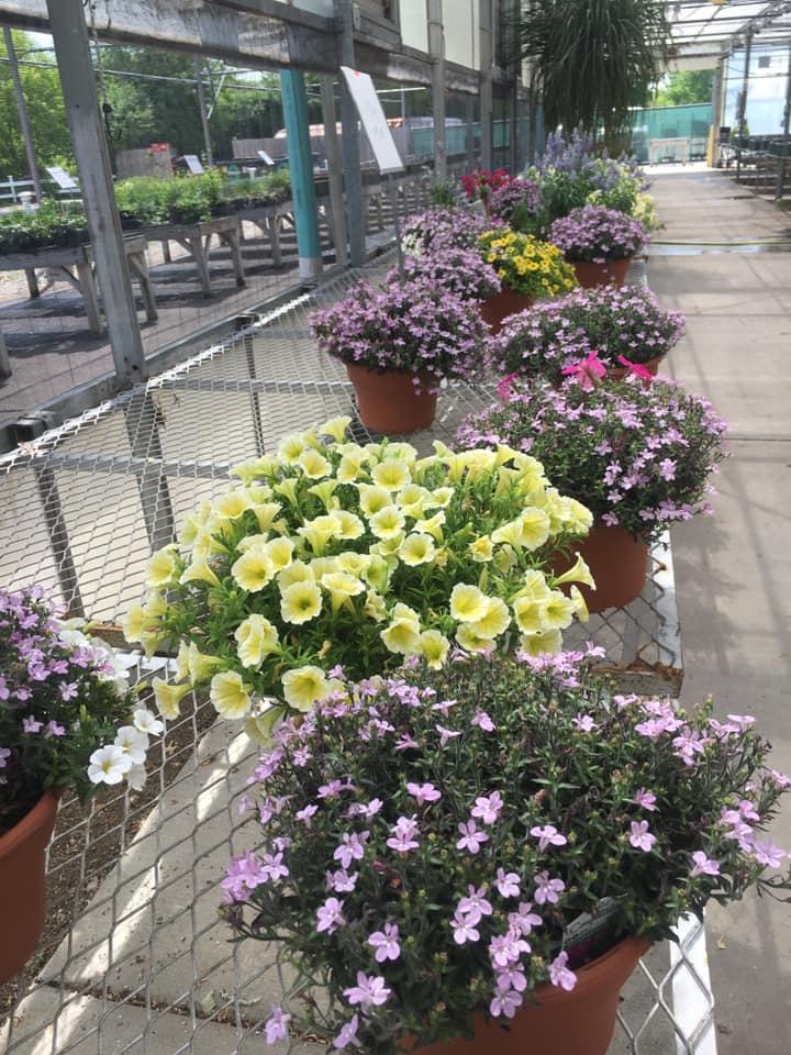 10inch Outdoor Flowers