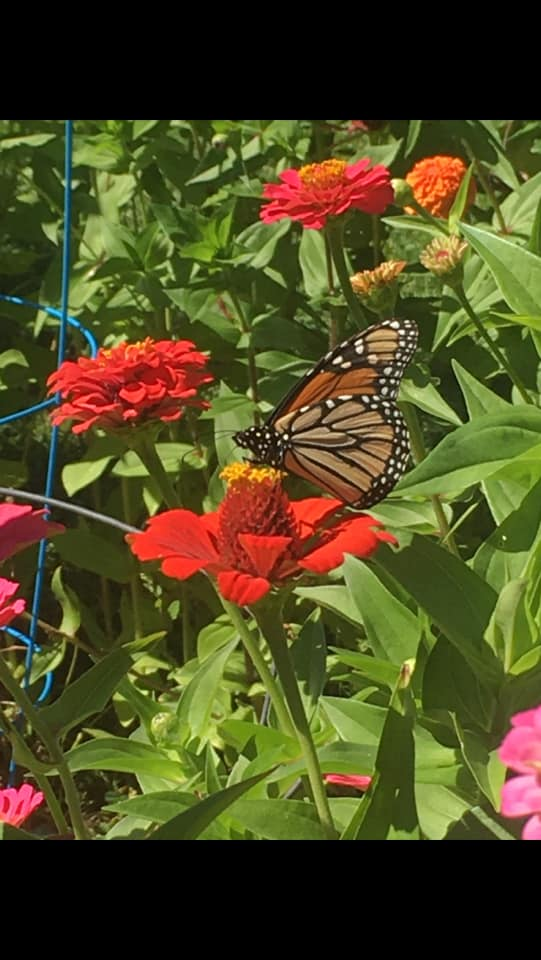 plant attracting butterfly