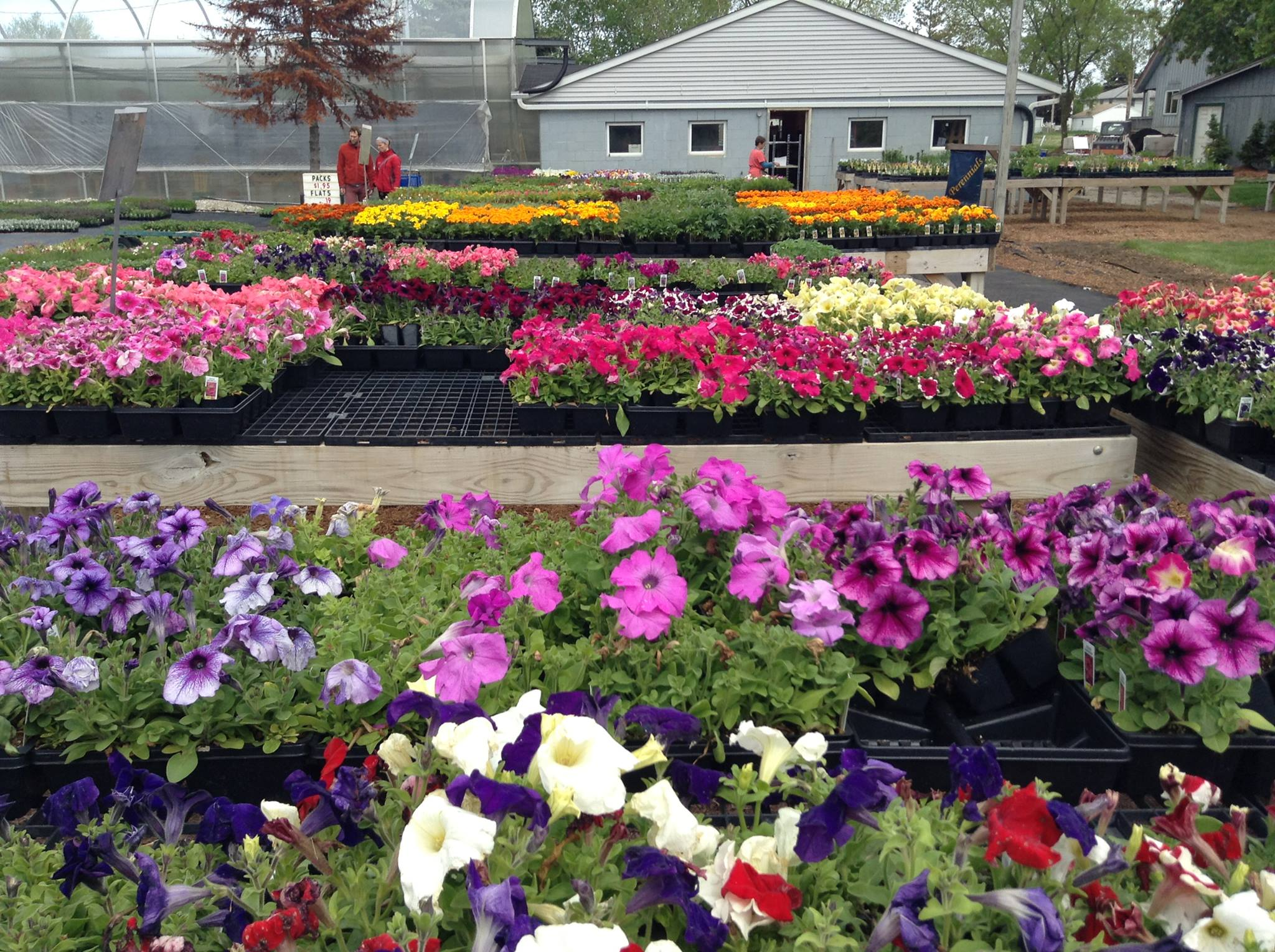 Outside of Custom Grown Greenhouse and Garden Center with many plants and flowers