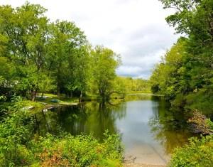 Greenery by the Lake