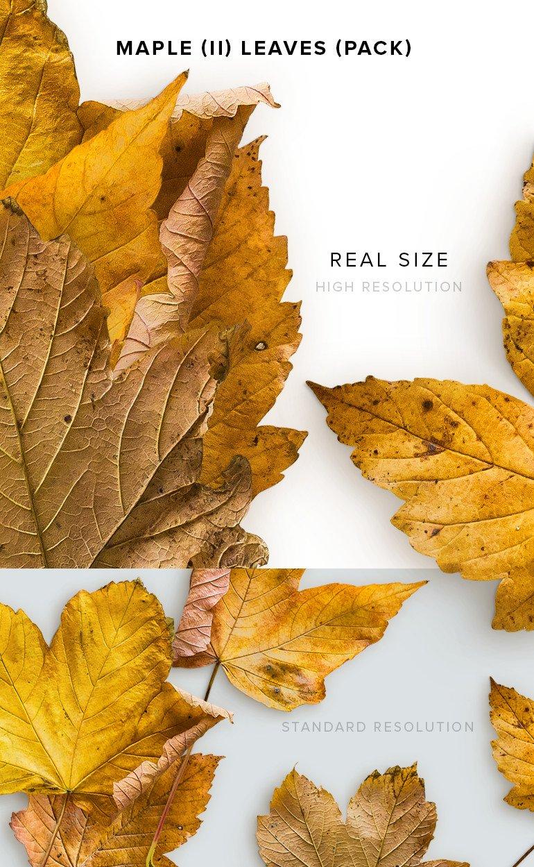 item-description-maple-2-leaves-pack