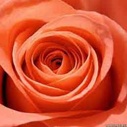 Orange-Wedding-Garters-Bridal-Garters-Prom-Garters-Custom-Wedding-Garter-Linda-Joyce-Couture