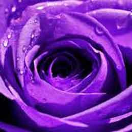 Purple-Wedding-Garters-Bridal-Garters-Prom-Garters-Custom-Wedding-Garter-Linda-Joyce-Couture