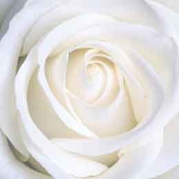 White-Wedding-Garters-Bridal-Garters-Prom-Garters-Custom-Wedding-Garter-Linda-Joyce-Couture