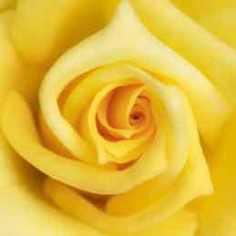 Yellow-Wedding-Garters-Bridal-Garters-Prom-Garters-Custom-Wedding-Garter-Linda-Joyce-Couture