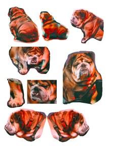 bulldog mix