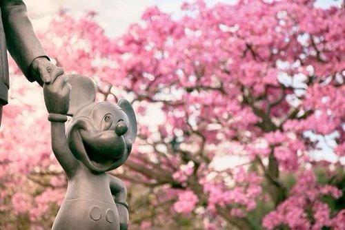 sakura01 min - お花見も楽しめる春の東京ディズニーリゾート〜桜は咲いてる?