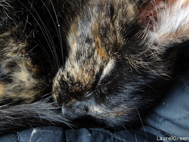 A close-up of a sleeping tortoiseshell cat.