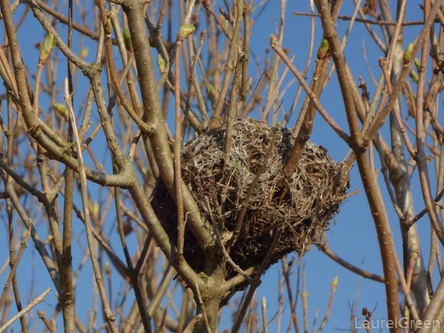 a photograph of a bird's nest