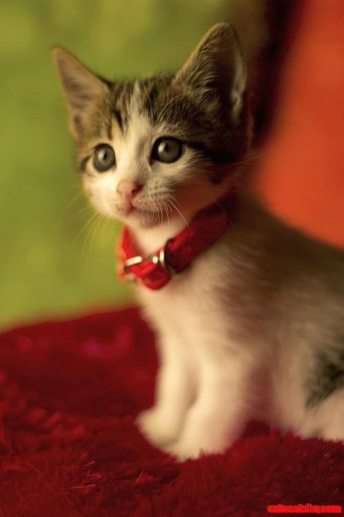 Cute Cats Kitten Love