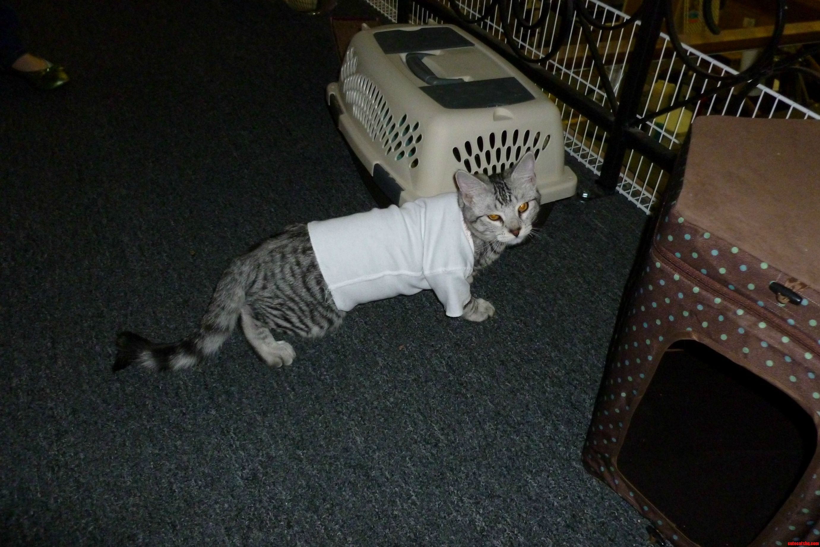 baby clothes fit cats