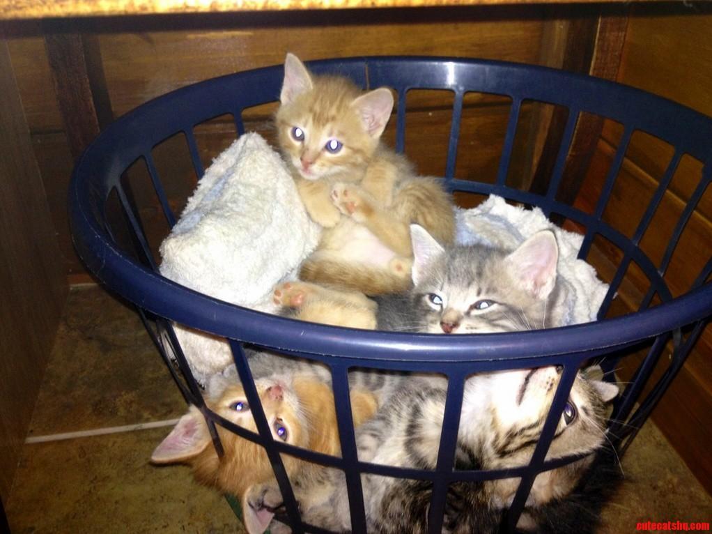 Cousin Birthday Kittens