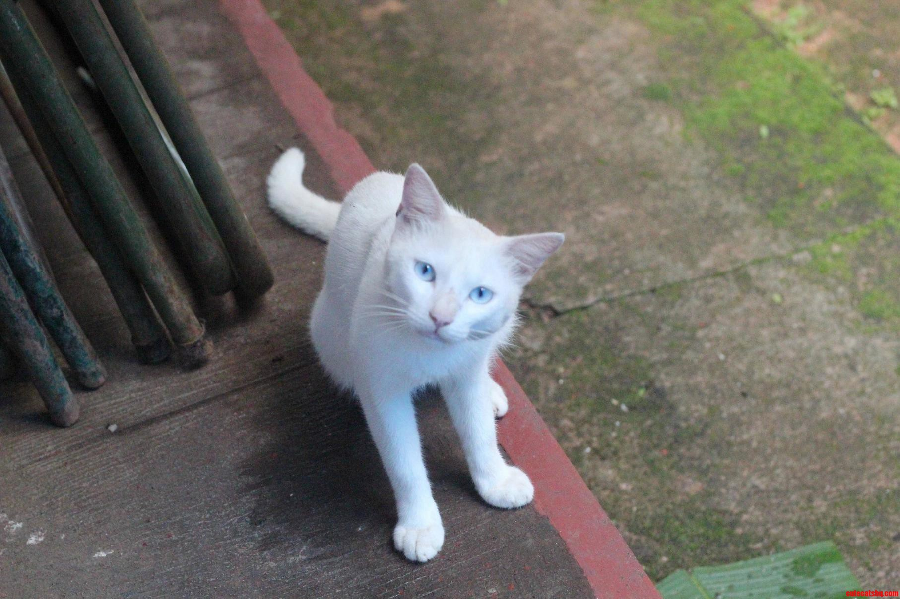An albino cat with beautiful eyes  Cute cats HQ