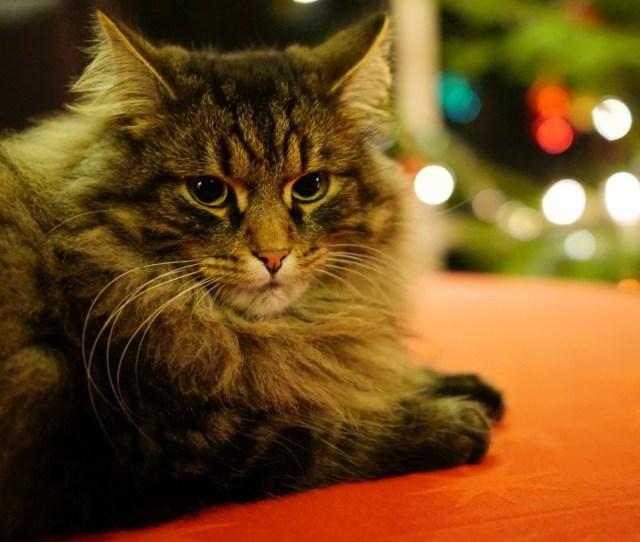 Christmas Kitty Christmas Kitty