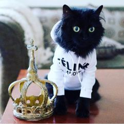 How Can I Clean My Sofa American Set Cat Wearing A Hoodie | Cute Cats Hq - Pictures Of ...
