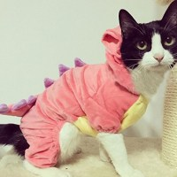 Pet Cat Costumes | www.imgkid.com - The Image Kid Has It!