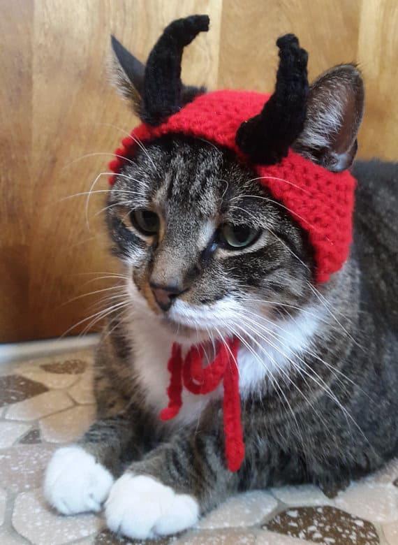 Devil Cat Cute Cats In Hats