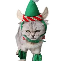 Small Cat Costumes - Goldenacresdogs.com