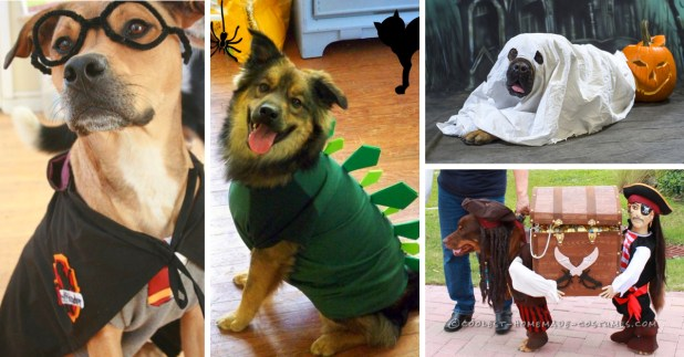 Quick diy halloween costumes for dogs cartoonview 20 adorable diy pet costume ideas for halloween 2017 solutioingenieria Choice Image