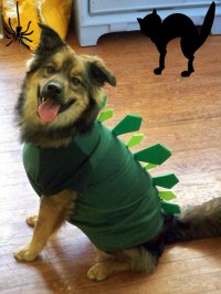 Dog Dinosaur Costume Diy