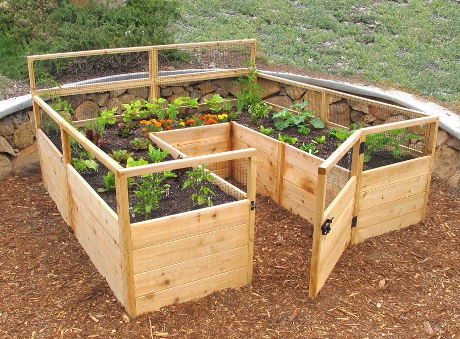 Garden Box Vegetables Plan