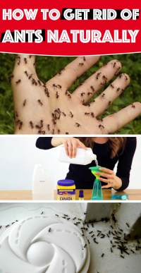 How To Get Rid Of Ants In Garden Soil Naturally